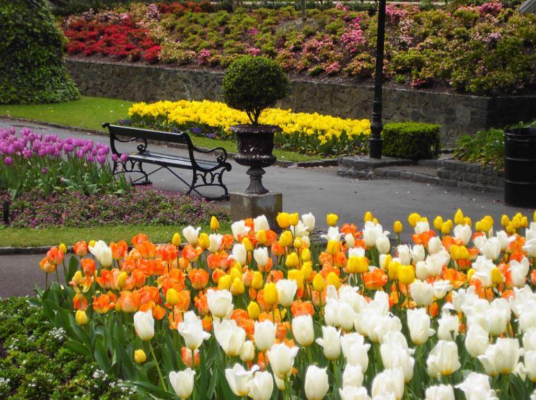 Wellington Botanic Gardens in spring By denisbin