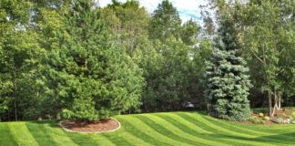 best time to grass seed your garden