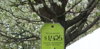 How Much Does it Cost To Plant a Tree