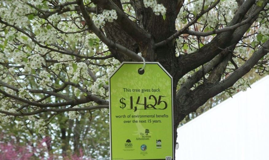 How Much Does it Cost To Plant a Tree Price Informations