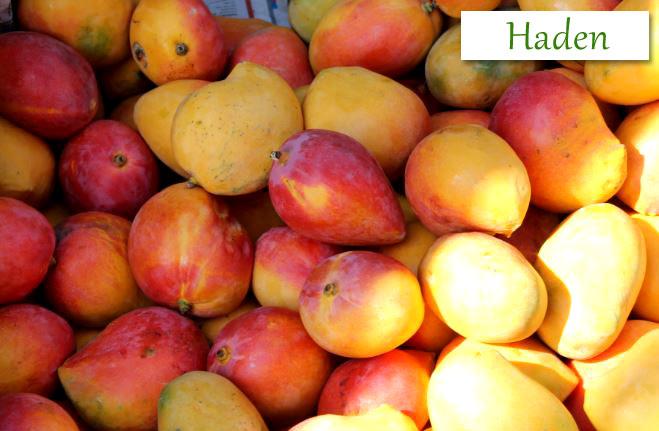 Haden Mango Fruits
