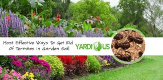 get rid of termites in your garden