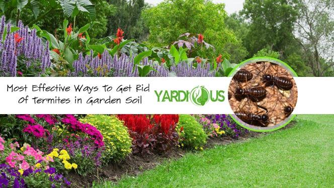 get rid of termites in your garden