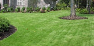 zousia lawn grass