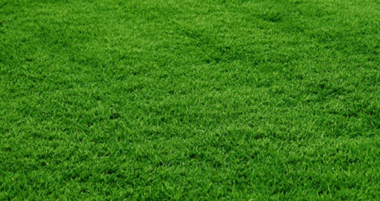 Zoysia Korean Grass