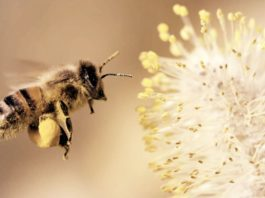 get rid of the sweat bees