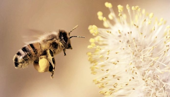 How To Get Rid Of The Sweat Bees: The Best Guide